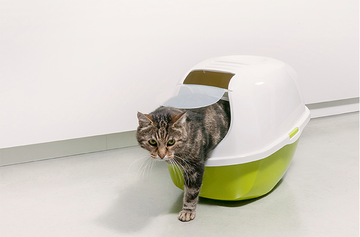 Moderna-products-smart-cat